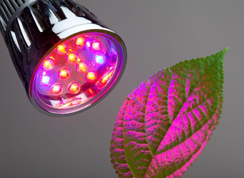 led verlichting de soorten voordelen voor jouw kweekruimte